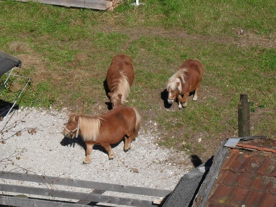 Unsere Pony´s, © Kriner-Barmsee